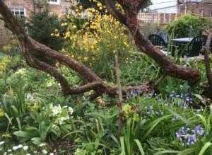 Garden in Sping